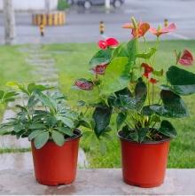 Chậu nhựa ươm cây giống TBNN011